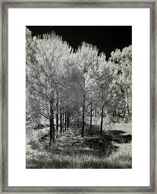 Infrared Trees Framed Print by Stavros Argyropoulos
