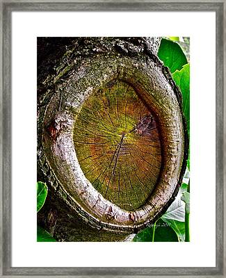 Ingrained Wisdom Framed Print by Rotaunja