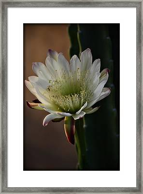 Inner Beauty  Framed Print