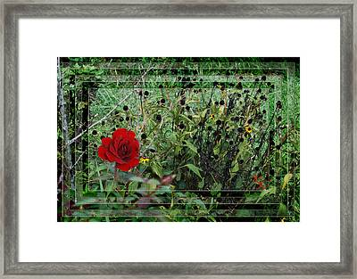 Inner Layers Framed Print by Kelly Rader