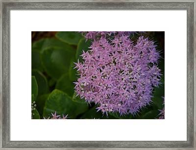 Framed Print featuring the photograph Inner White by Joseph Yarbrough