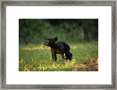 Innocence Framed Print by Doug McPherson