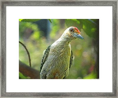 Framed Print featuring the photograph Inquisitive Woodpecker by Debbie Portwood