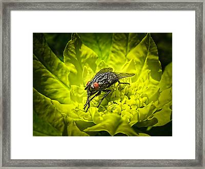 Insect Up Close - Summer Fly Sunbathing On A Yellow Perennial Garden Plant - Macro Photography Framed Print by Chantal PhotoPix