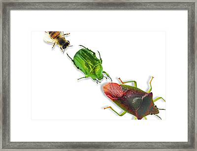 Insects Framed Print by Gombert, Sigrid