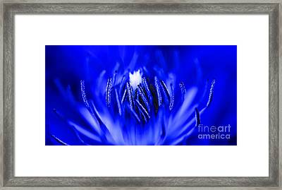 Inside A Flower Framed Print
