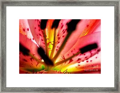 Inside A Lily Framed Print by Kaye Menner