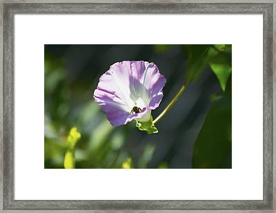 Inside Looking Out Framed Print