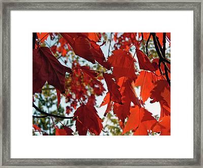 Inside Out Maple Framed Print
