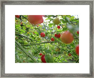 Inside The Red Huckleberry Framed Print by Kym Backland