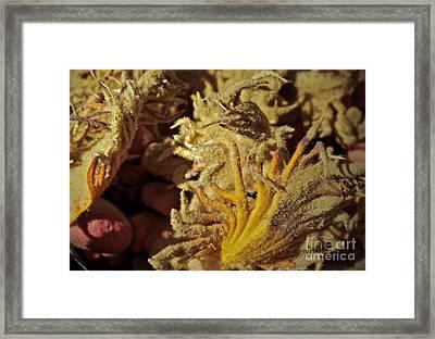 Inside The Sago Palm Framed Print by Gwyn Newcombe