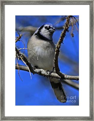 Inspired Moments  Framed Print by Inspired Nature Photography Fine Art Photography
