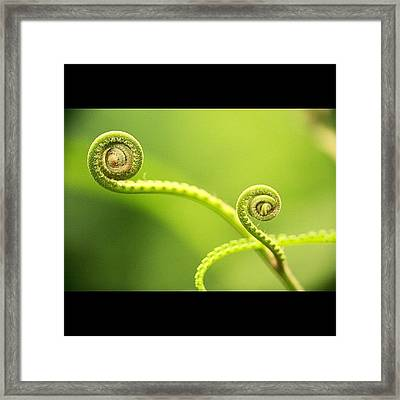 #instanaturelover #all_shots #cute Framed Print