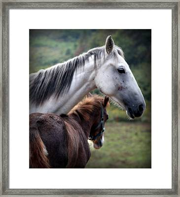 Instinct Of Love Framed Print by Karen Wiles