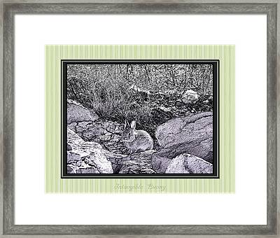 Intangible Bunny Framed Print by Susan Kinney