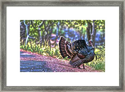 Intense Tom Turkey Display Framed Print by Gregory Scott