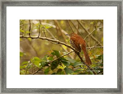 Intensity Framed Print by Jack Norton