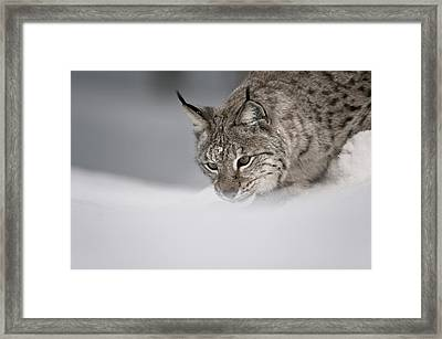 Intent To Cause.. Framed Print by Andy Astbury