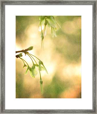 Interlude Framed Print by Amy Tyler
