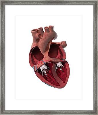 Internal Heart Anatomy, Artwork Framed Print by Claus Lunau