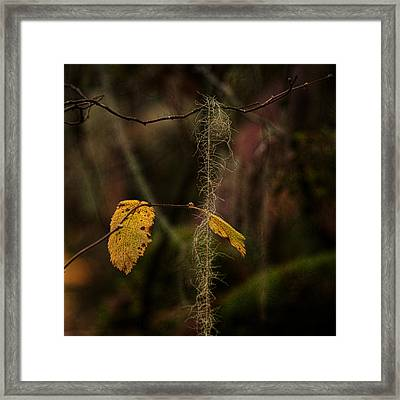 Intertwined Framed Print by Bonnie Bruno