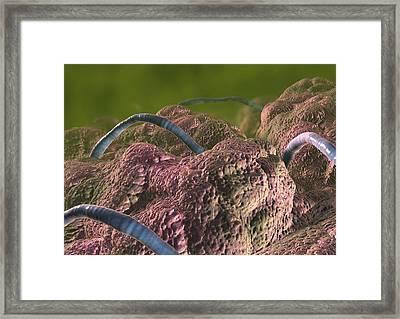 Intestinal Parasites, Artwork Framed Print by David Mack