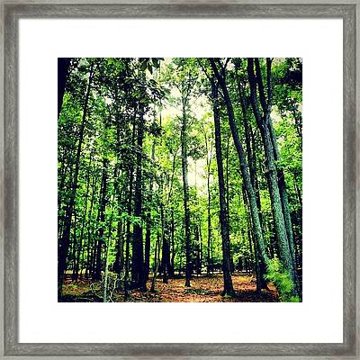 #inthewoods #trees #trail #pathway Framed Print