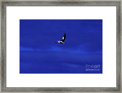 Framed Print featuring the photograph Into The Blue by Blair Stuart