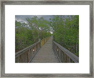 Into The Groves Framed Print