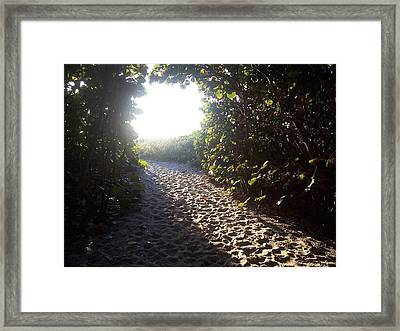 Into The Light Framed Print by Sheila Silverstein