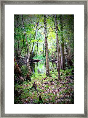 Into The Swamp Framed Print by Carol Groenen