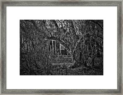 Into The Wilderness Framed Print by Jerry Cordeiro