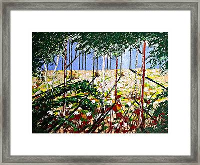 Into The Wood Framed Print