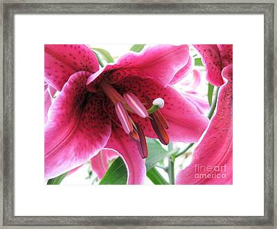 Framed Print featuring the photograph Intoxicating Aroma Lillie by Judy Via-Wolff