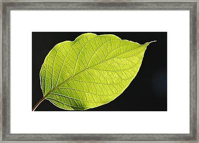 Framed Print featuring the photograph Intricacies Of A Leaf by Mary McAvoy