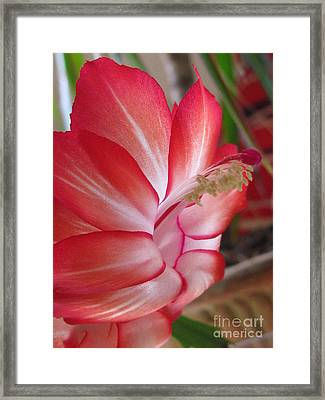 Inventiveness Photography Framed Print