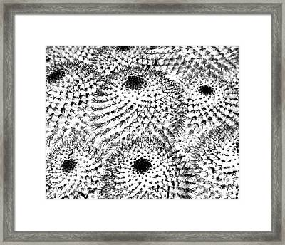 Framed Print featuring the photograph Invisible Cactus by Rebecca Margraf