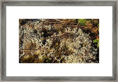 Invisible Dragon Framed Print by Waldemar Okon