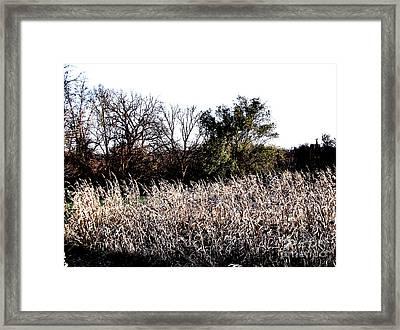 Iowa Cornfield Framed Print by Marsha Heiken