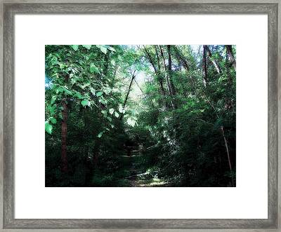 Framed Print featuring the photograph Iowa Forest by Clarice  Lakota