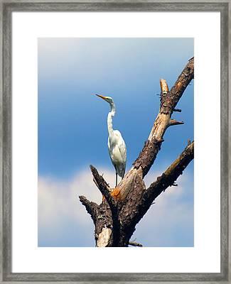 Irene Framed Print by Kim Schmidt