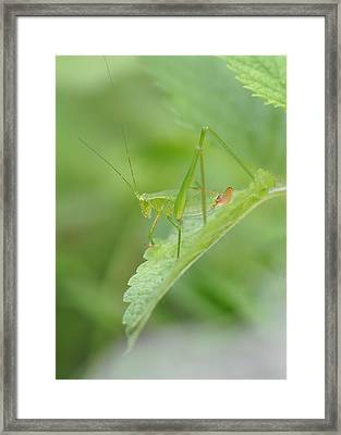 Iridescent Green Beauty On Lemon Balm Framed Print