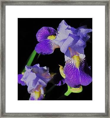 Iris-13 Framed Print by Todd Sherlock