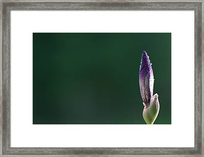 Iris 8 Framed Print