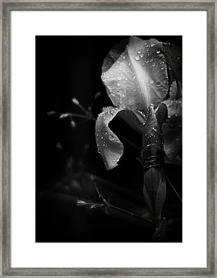 Iris Adorned Framed Print