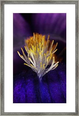 Iris Beard Framed Print