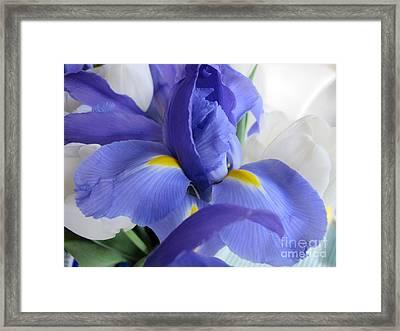 Framed Print featuring the photograph Iris Bloom by Arlene Carmel