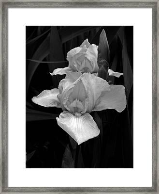Framed Print featuring the photograph Iris by David Pantuso