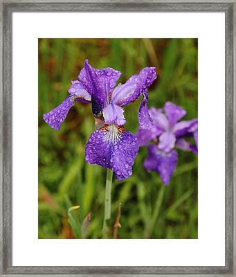 Framed Print featuring the photograph Iris Dew by Coby Cooper