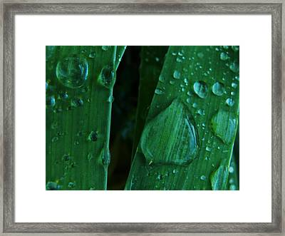 Iris Drops Framed Print by Barbara St Jean